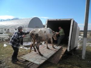 Перевезення тварин