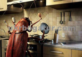 боротьба з тараканами