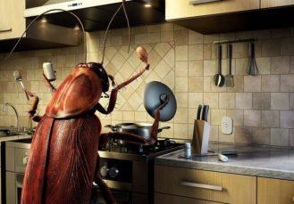 избавиться от тараканов при переезде